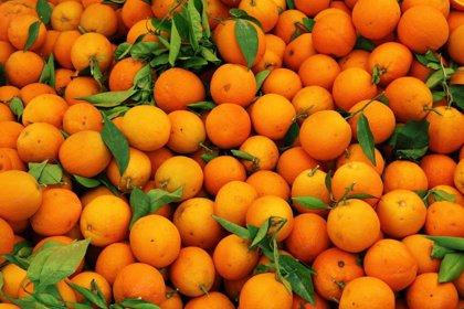 Las naranjas con más color contienen más antioxidantes