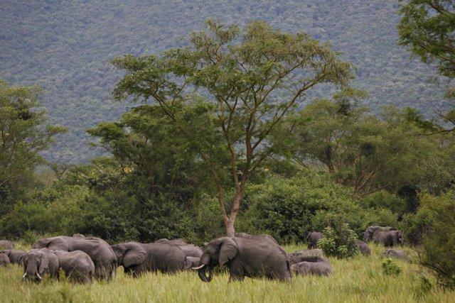 Elefantes en el Parque Nacional Virunga en RDC