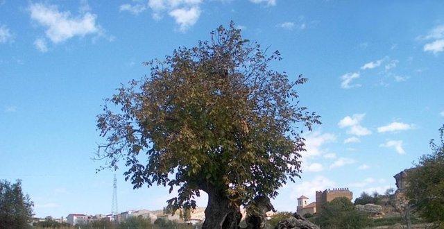 Noguera del Arco en Socovos (Albacete)
