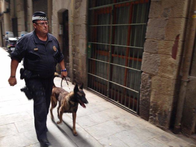 Mosso y perro en la operación en Barcelona contra lateros que venden cocaína