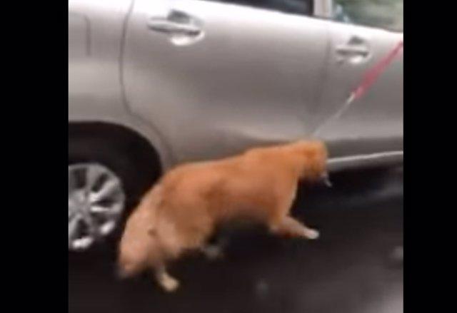 Un perro maltratado