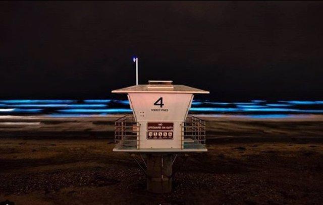 Bioluminiscencia en las playas de California