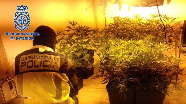 Punto de venta de droga desarticulado en Badajoz