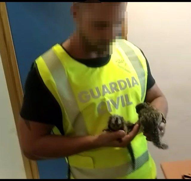 Guardia Civil, con monos Titi recuperados