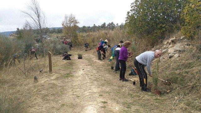 Arbolada semillas plantación árboles ciudadanía naturaleza lucha cambio climatic