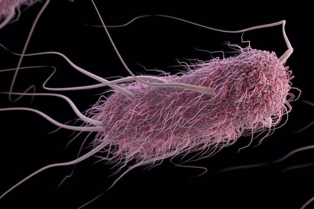E. Coli, escherichia coli