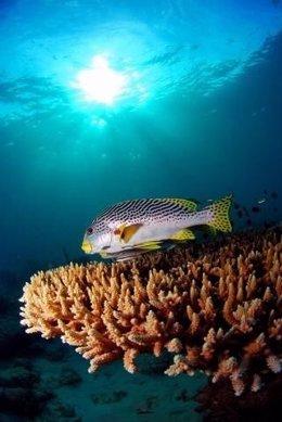 El calentamiento del océano afecta a los ecosistemas marinos, según la UICN