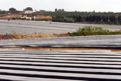 IULV-CA lleva al Parlamento andaluz la situación de las trabajadoras de la fresa en la provincia de Huelva