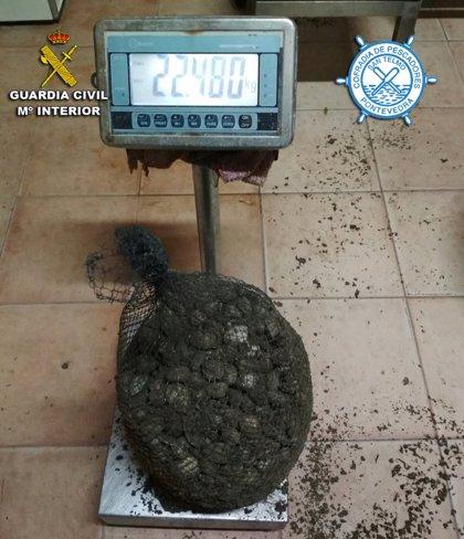 La Guardia Civil intercepta en Poio (Pontevedra) a un furtivo con 22 kilos de almeja