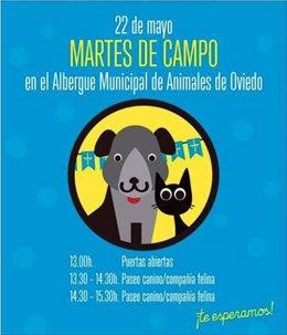 Jornada de puertas abiertas Albergue animales Oviedo Martes de Campo