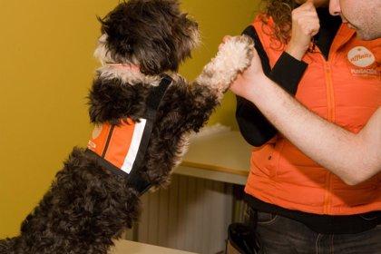Demuestran los beneficios de las terapias con perros en adolescentes tutelados