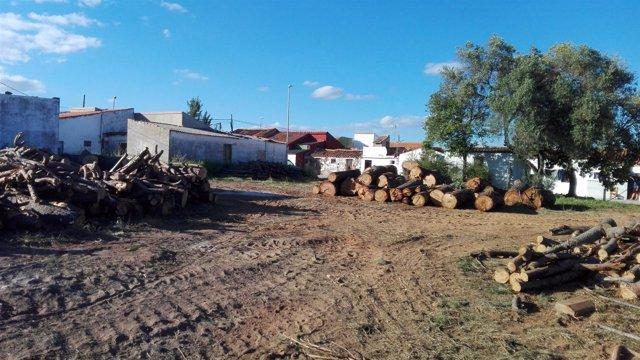 Fiscal a incoa diligencias de investigaci n tras una tala for Investigacion de arboles