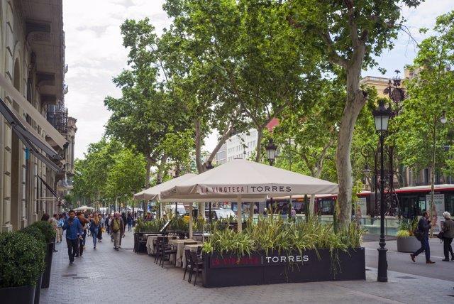 La Vinoteca Torres renueva su carta con nuevas propuestas