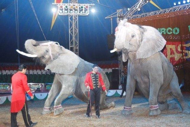 Madrid marcará un tiempo de adaptación para los circos con animales