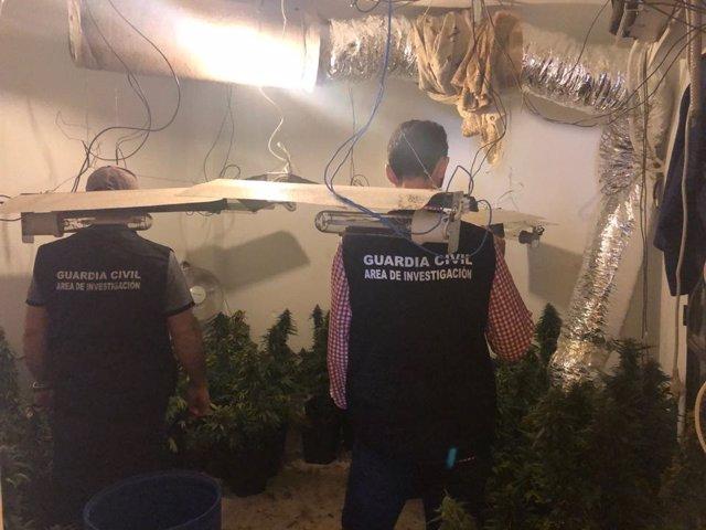 Plantación desmantelada en Espeluy