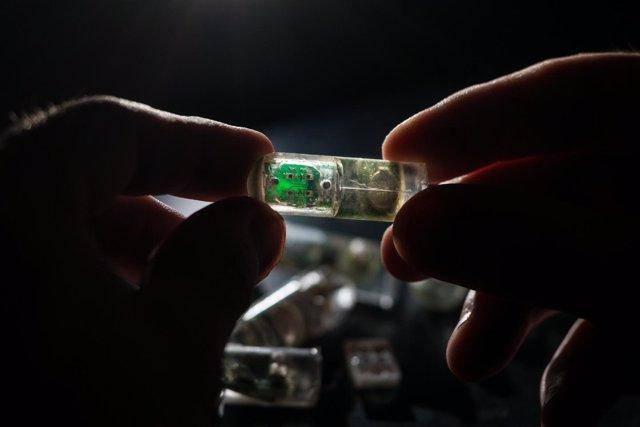 Bacterias en un chip tragable para diagnosticar enfermedades