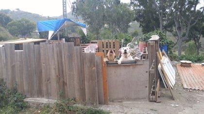 Denunciado el propietario de dos perros peligrosos que intimidaban a los vecinos en Teror (Gran Canaria)