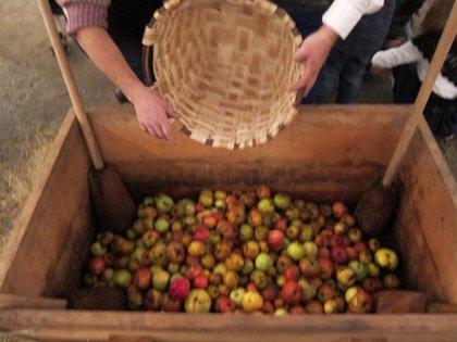 Pleno.- Aprobada una proposición para el impulso del sector de cosecheros de manzana de sidra