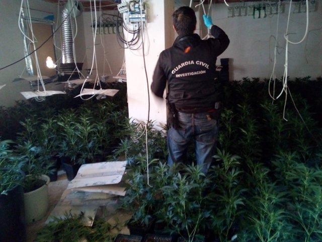 Plantación de marihuana intervenida en la provincia de Granada