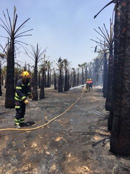 Uno de los huertos de palmeras afectados
