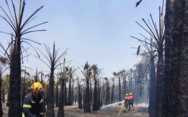Un incendio forestal calcina dos hectáreas de huertos de palmeras y una de pinar en Torrevieja