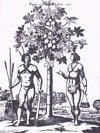 La ciencia demuestra que los indios del Caribe no eran caníbales