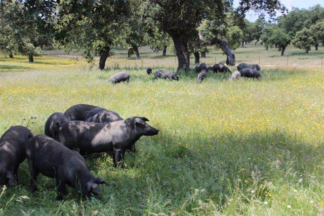 Nota De Prensa Agricultura (Capa Montanera)