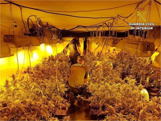 Cultivo indoor de marihuana en Pedreguer