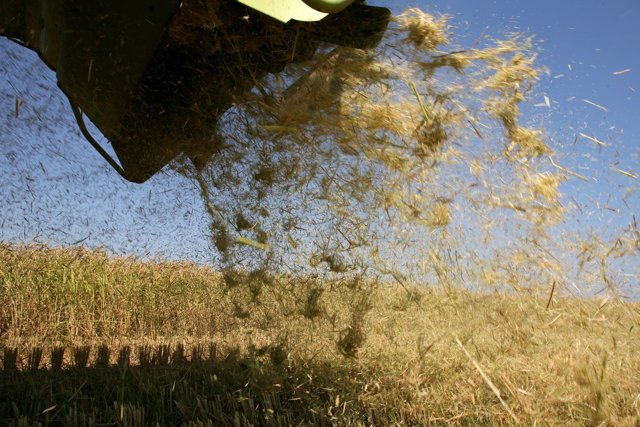 Quemas agrícolas, recolector, campo, segar, siega