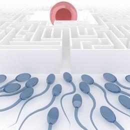 Ovario, óvulo, infertilidad