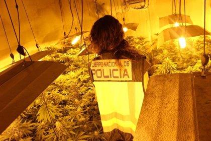 Policía Nacional desmantela once cultivos de marihuana 'indoor' en la barriada de Los Asperones y detiene a 11 personas