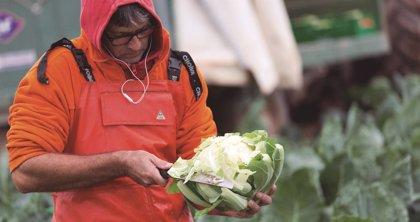 Mercadona compra 324.000 kilos de coliflor de Calahorra (La Rioja)