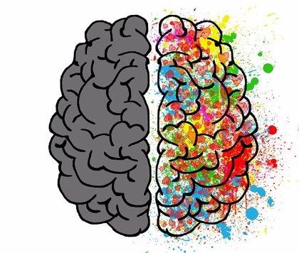 ¿Cómo afecta la cocaína al cerebro?