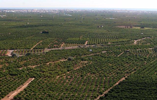Regadío, agricultura, campos