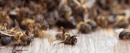 La Comisión Europea lanza una iniciativa para proteger a los insectos polinizadores