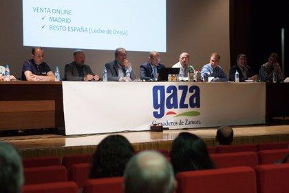 Gaza aumentó su volumen de facturación un nueve por ciento en 2017