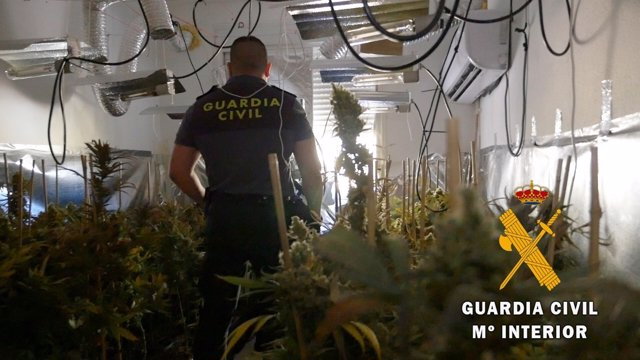 Operación 'Clean' de Guardia Civil contra el cultivo indoor de marihuana