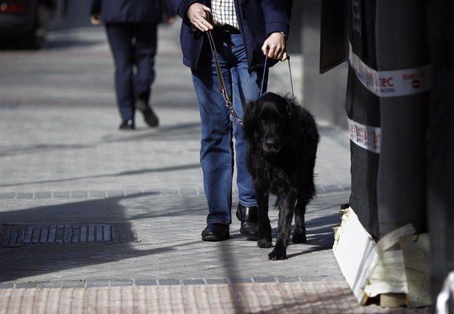 Discapacidad, discapacitado, ciego, personas ciegas con perro guía, lazarillo