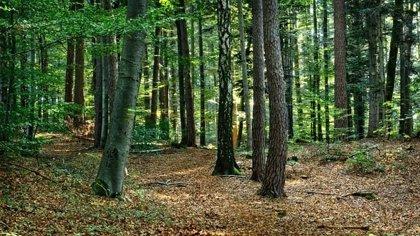 Los anteproyectos de leyes de Administración Ambiental y Conservación al Patrimonio Natural se abren a la participación