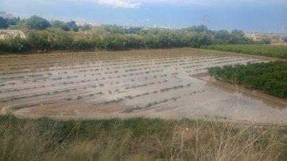 Las tormentas dañan hasta 3.000 hectáreas de cebolla, calabaza, patata y cítricos