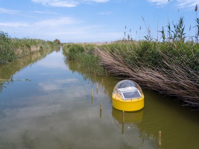 Fwd: Ndp Un Sistema De Medición A Tiempo Real Monitorizará El Agua De L'Albufera