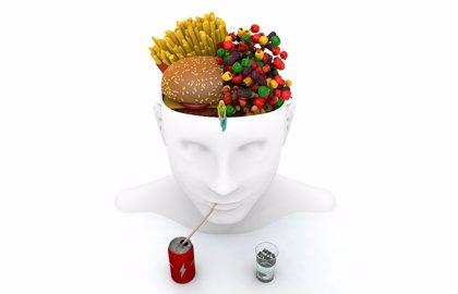 El éxito de una dieta puede depender de la estructura cerebral