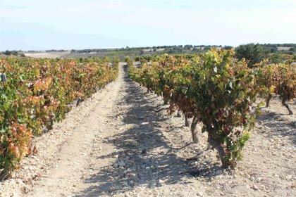 Bodegas Emilio Moro emplea drones para obtener el máximo potencial productivo de sus viñedos