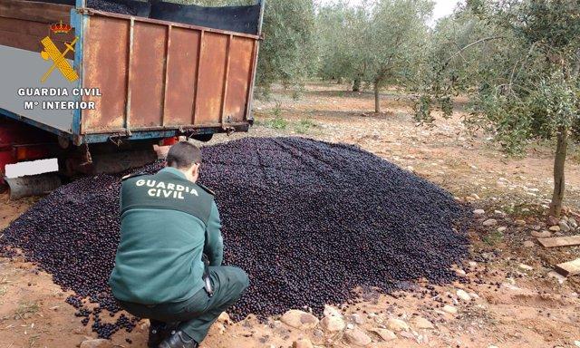 Inspección en el olivar