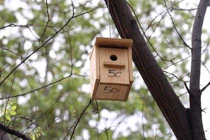 Las cajas nido de la Castellana darán la bienvenida en quince días a sus primeros polluelos