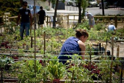 Los cambios ambientales podrían reducir la producción de verduras