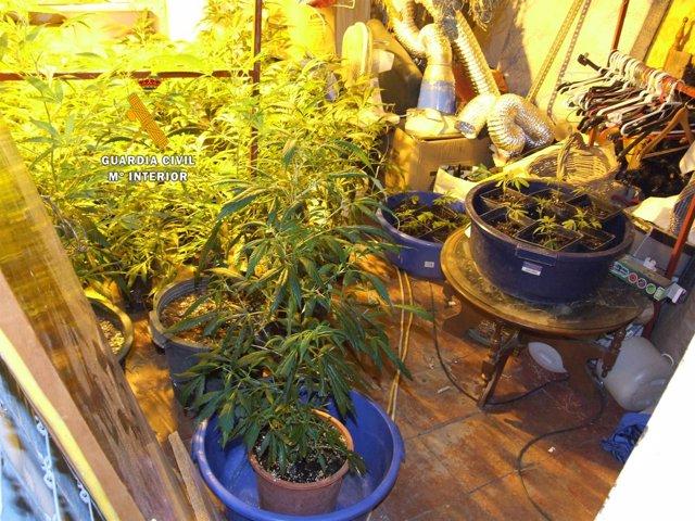 Plantación de marihuana indoor málaga