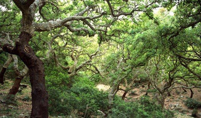 Ecosistemas de Andalucía