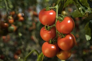 Ecologistas alertan de un aumento de pesticidas disruptores endocrinos en alimentos (CEDIDA - Archivo)