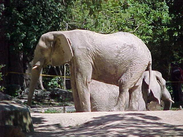 Muere la elefanta Ruperta en medio de denuncias por desnutrición en Venezuela